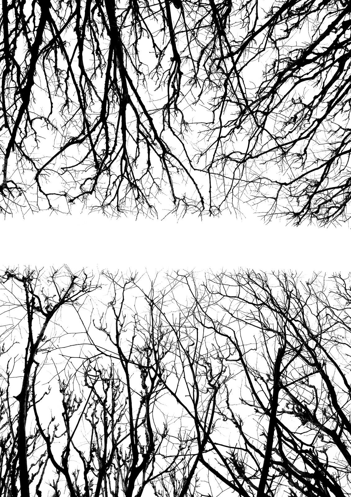 Casali - Les branches - La rivière