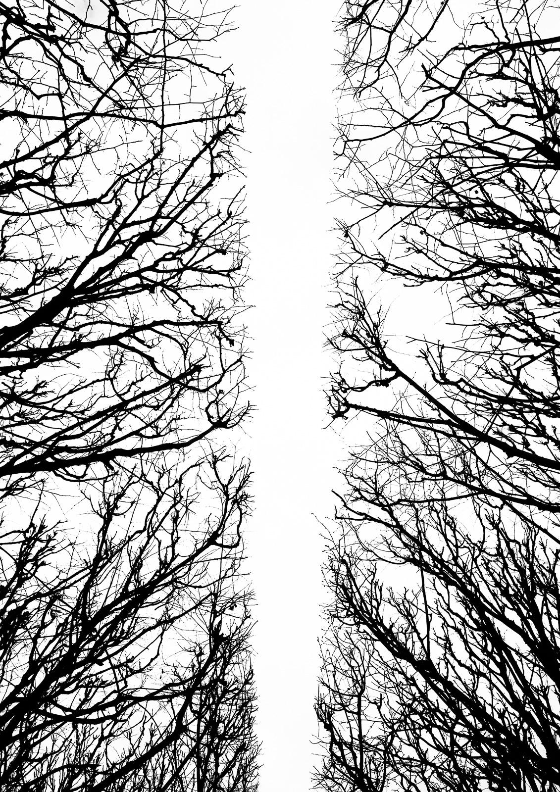Casali - Les branches - Le chemin