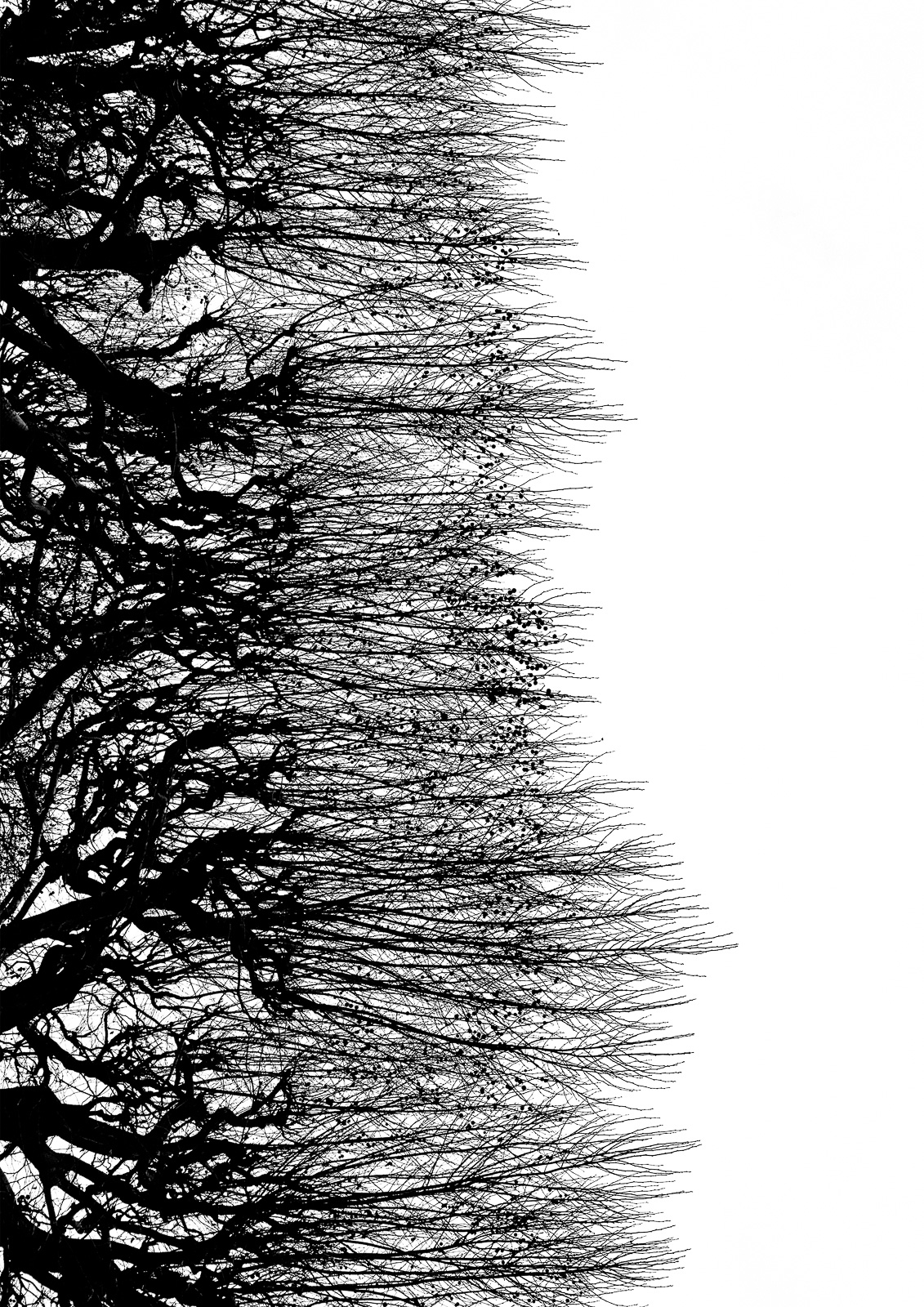 Casali - Les branches - Rides obscures
