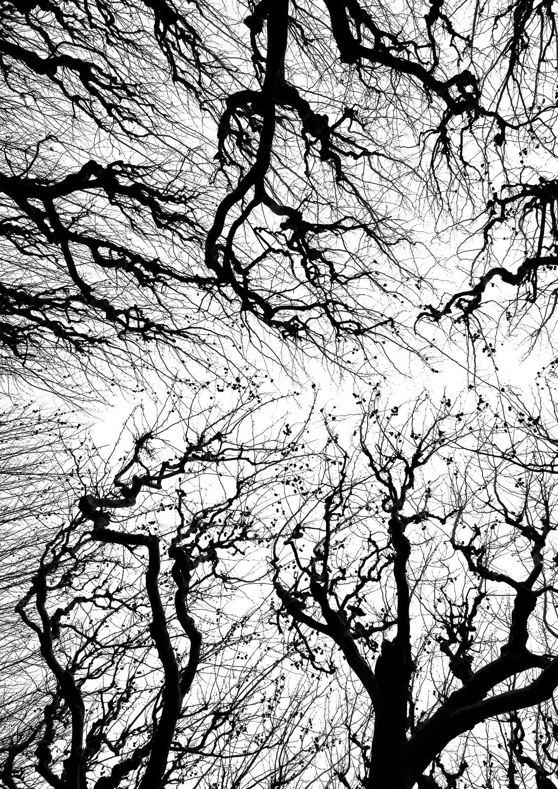 Casali - Les branches - Tim part A