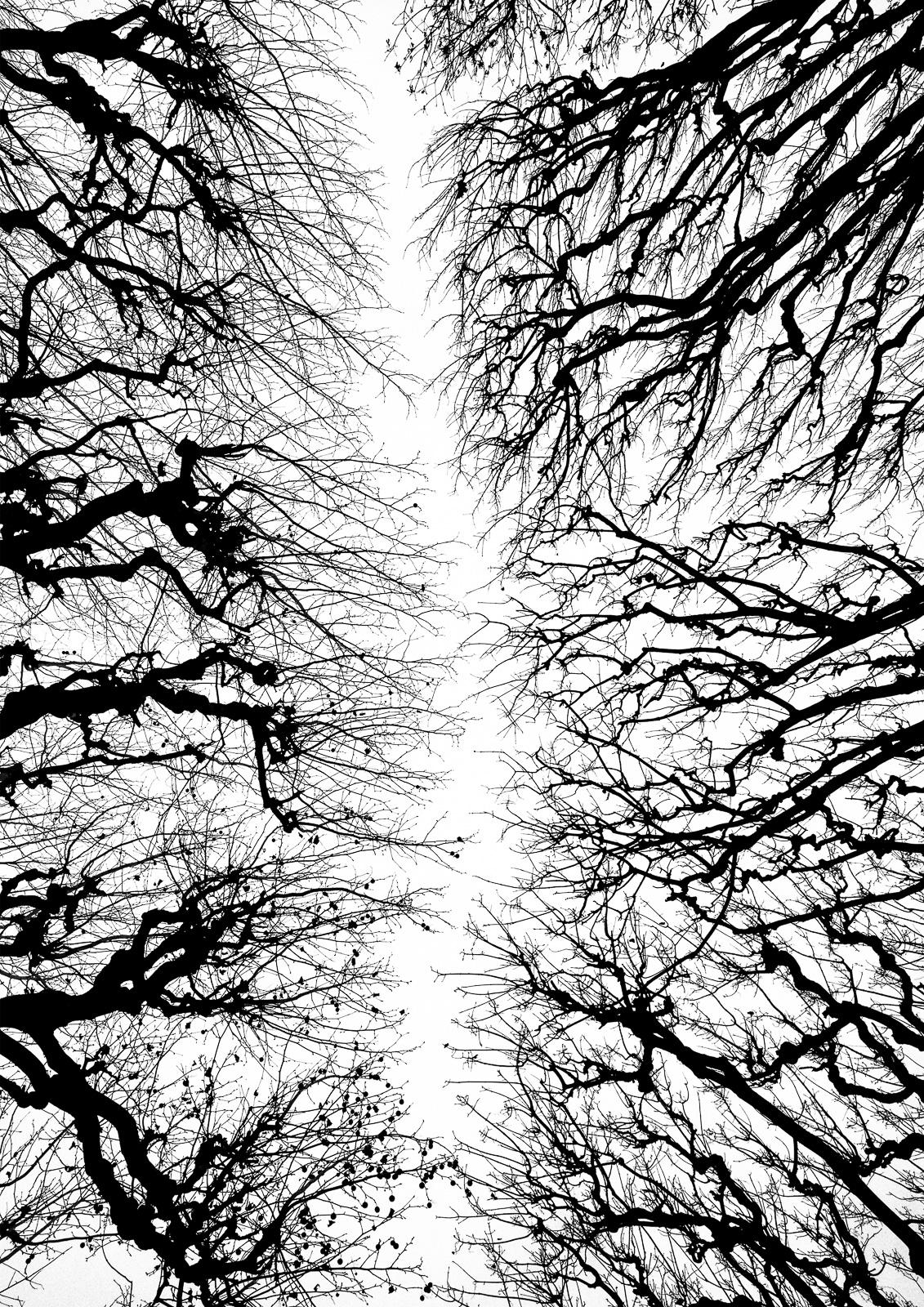 Casali - Les branches - Tim part B