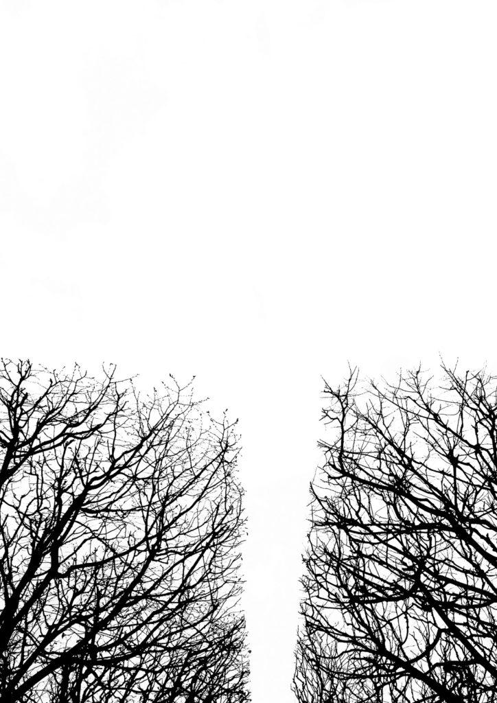 Casali - Les branches - A l'extrème